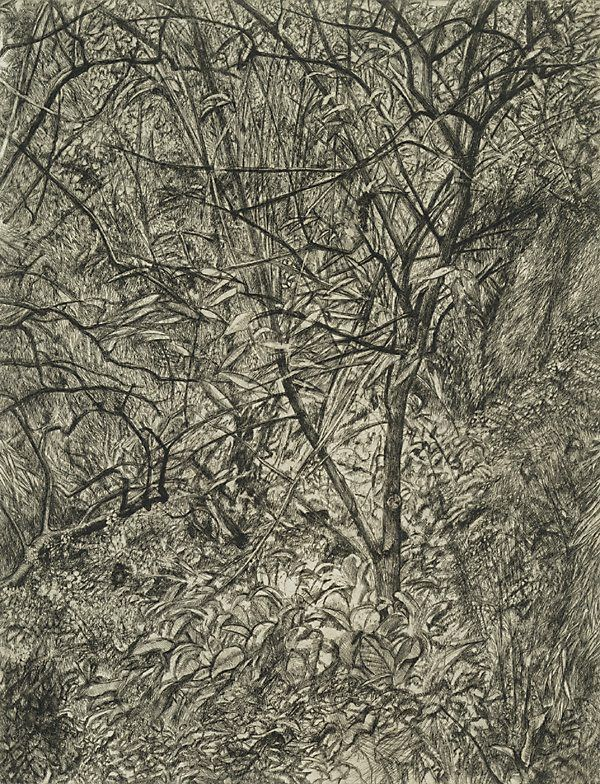 Garden in Winter, (1998-1999) by Lucian Freud :: The Collection :: Art Gallery NSW etching
