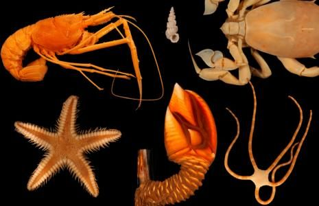 Invertebrates from the Gulf of Mexico