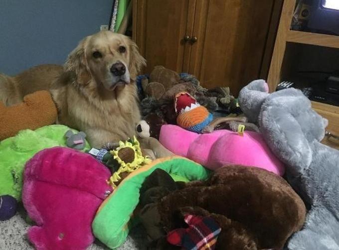 Il cane ogni notte si porta un gioco diverso nel suo letto - La Stampa