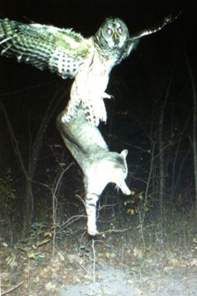 On a trail camera in Northern Minnesota... - Imgur