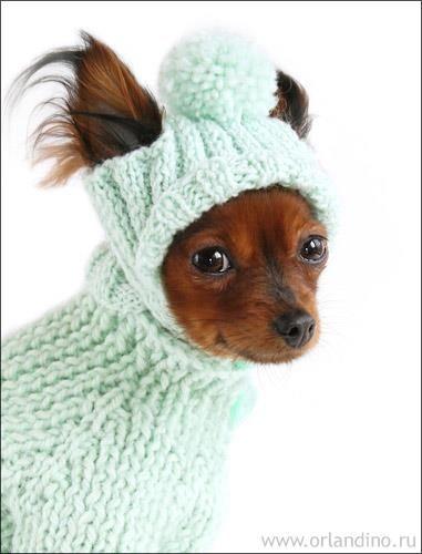 Вязанные костюмы для маленьких собак