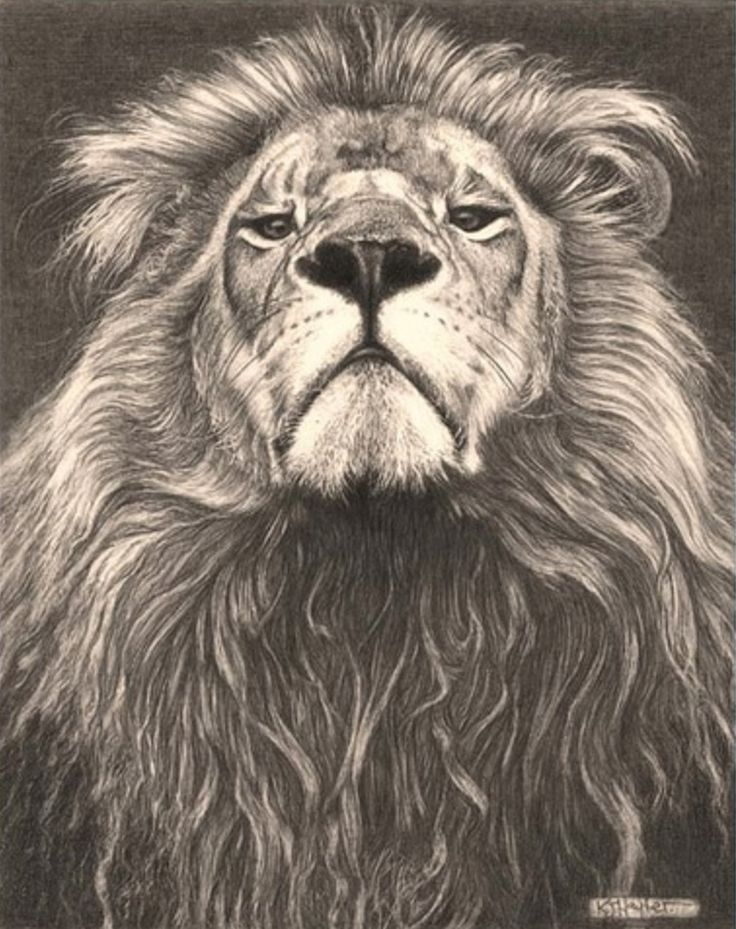 150 best images about Tattoos on Pinterest | More Lion ...