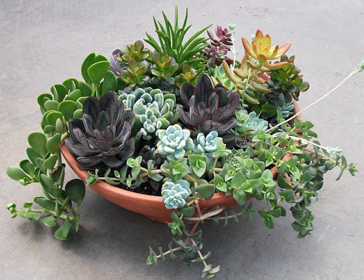 17 best images about succulents on pinterest gardens for Outdoor plants easy to care for