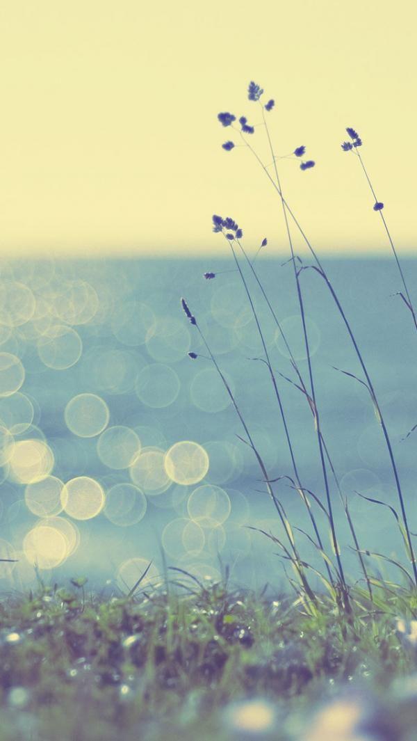 Coast Grass Sunshine IPhone Wallpaper - 50+ Examples of iPhone 5 wallpaper <3 !
