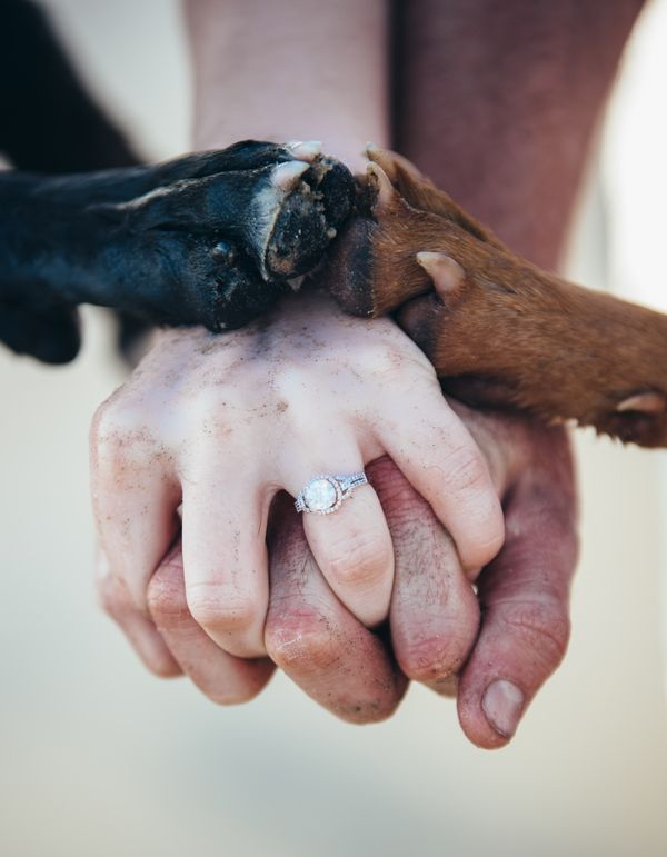 Love is great and dogs make it even better. A Del Mar beach engagement photo shoot with bride, groom and... dogs!  http://www.sandiegowedding.com/blog/love-is-great-and-dogs-make-it-even-better-a-del-mar-beach-engagement-photo-shoot-with-bride-groom-and-dogs