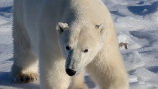 how to make a polar bear head - YouTube
