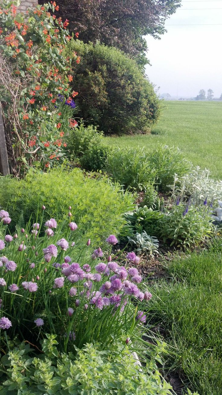 Good morning from our backyard country garden:-)