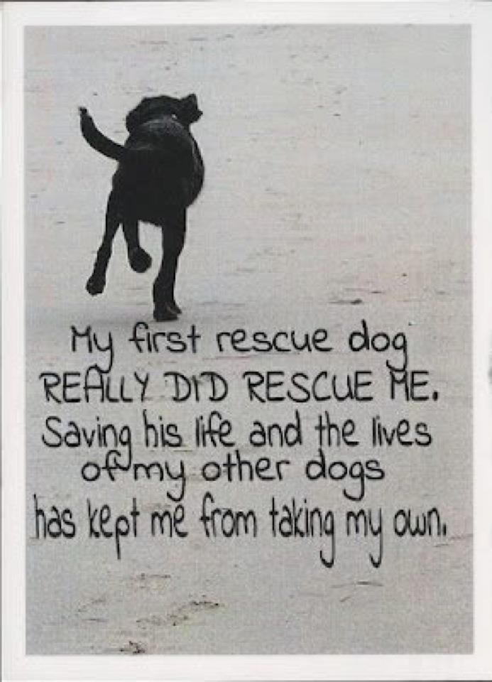 Shelter Dog Quotes Google Search Rescue Dog Quotes Shelter Dog Quotes Rescue Dogs