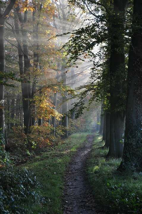 Pin by EJ Baker on Autumn Landscapes   Walk in the woods