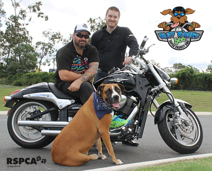 "Many motorbike riders have been hesitant to participate in our annual RSPCA Qld Inc. Ruff Riders charity bike ride due to anti-bikie laws. The Queensland government has issued a statement urging motorcycle enthusiasts to join Ruff Riders and has assured that participants won't be targeted by police. As our ride leader Craig Lowndes has said, ""We are ruff riders, not rough riders.""  If you'd still like to join the ride this Saturday May 3, it's not too late! Visit www.ruffriders.com.au"