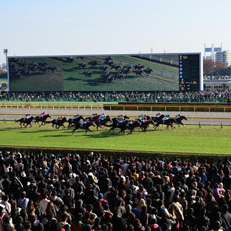 Horse race in Tokyo