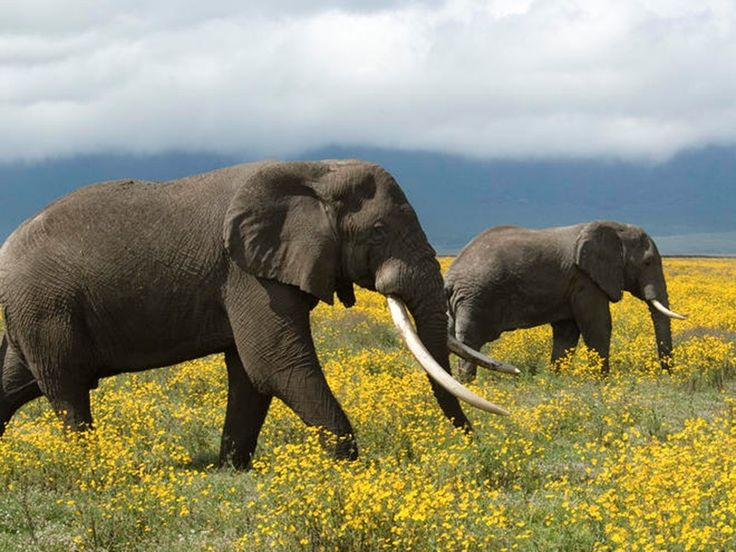 Elephant Gallery,Images, Pics, Photos, Pictures, Photography