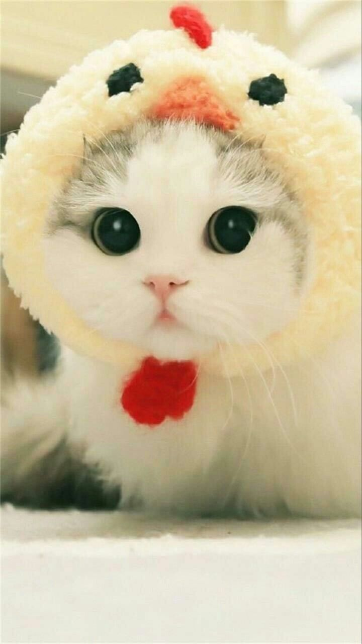 Pin Di Kitties