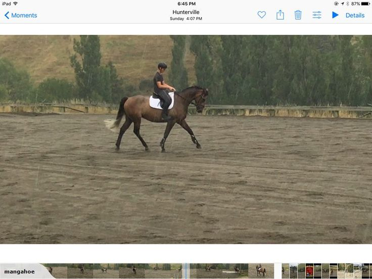 16.2hh 5yo Gelding. He is by the show-jumping stallion Kiwi Emillion out of an Anamour mare. 12K  06 3228144