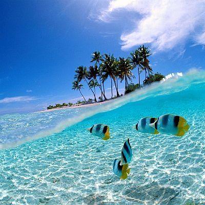 Amazing..  I'd love to visit Wakatobi, Indonesia <3