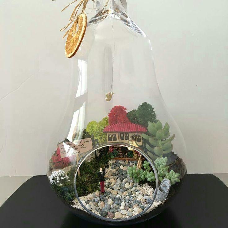 Safranbolu terrarium