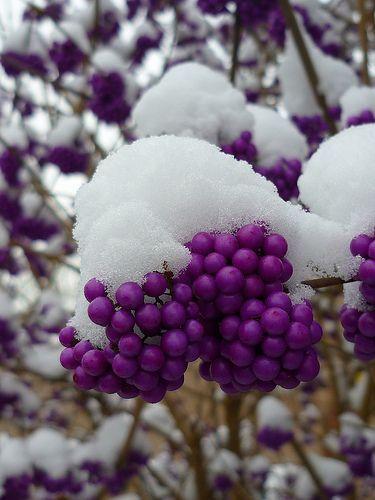 beautiful purple whisper of vintage