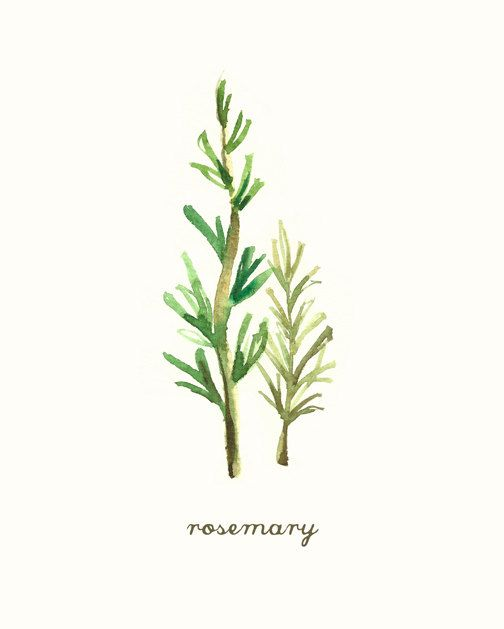 Rosemary watercolor painting, Botanical painting, Herbs, Kitchen art, Botanical illustration, Wall art for kitchen, Green