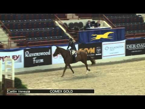 ▶ 511 COMEX GOLD Caitlin Venezia, Class 62 First Year Green Working Hunter - YouTube