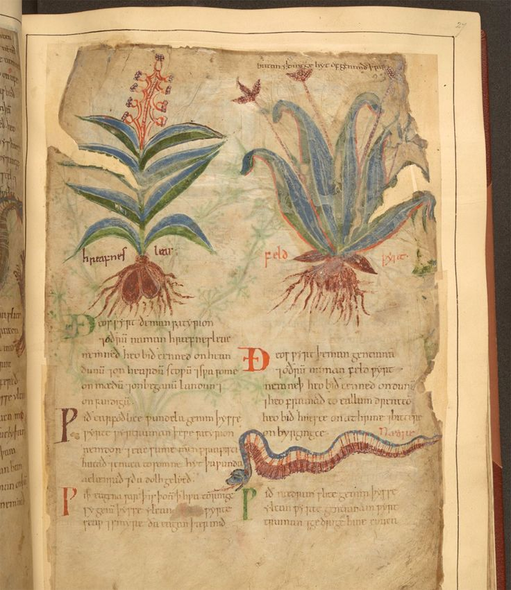 Digitally Explore a 1,000-Year-Old Illustrated Guide to Plants and Their Medical Uses | Colossal