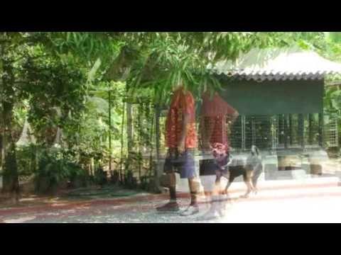 Rottweiler Dog for Sale at Kerala