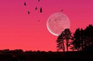 Pink Moon 2016 - Farmer's Almanac