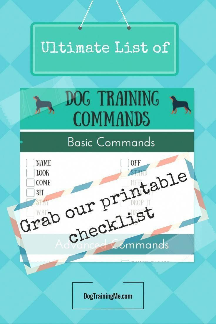 Command For Dog Training Have You Considered Getting A Dog Do