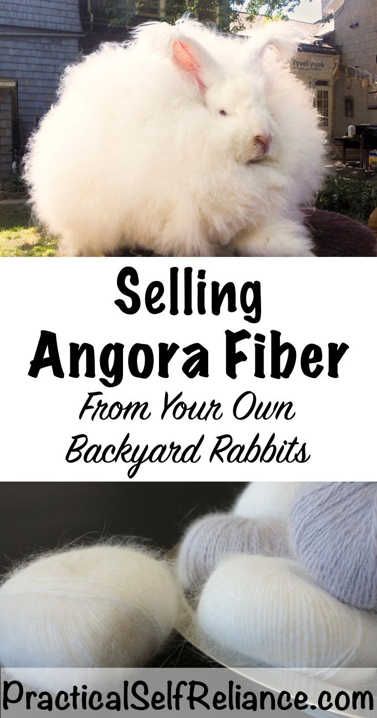 Selling Angora Rabbit Fiber