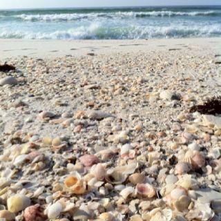 The gorgeous shells on the beach at Navarre Beach, FL.