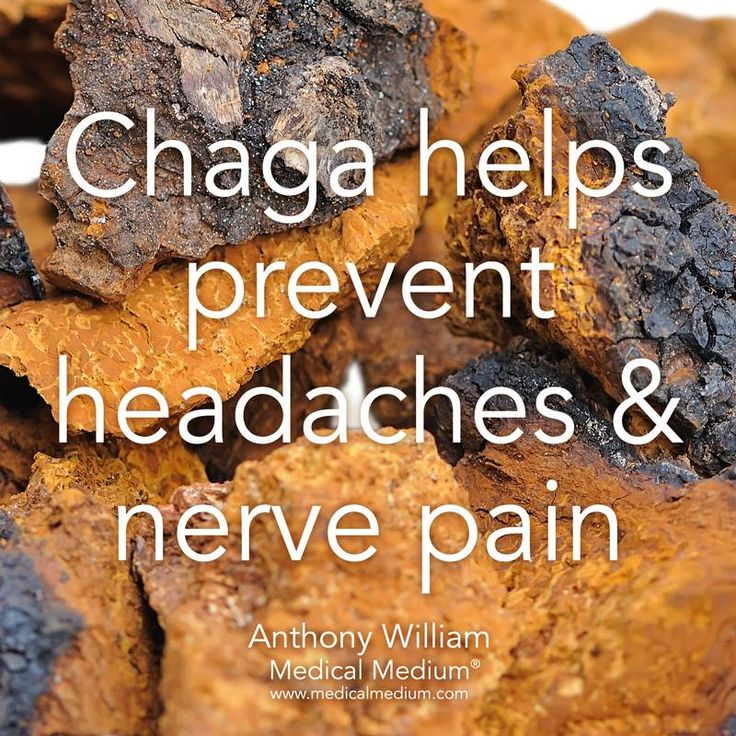 Chaga mushroom helps prevent headaches and nerve pain