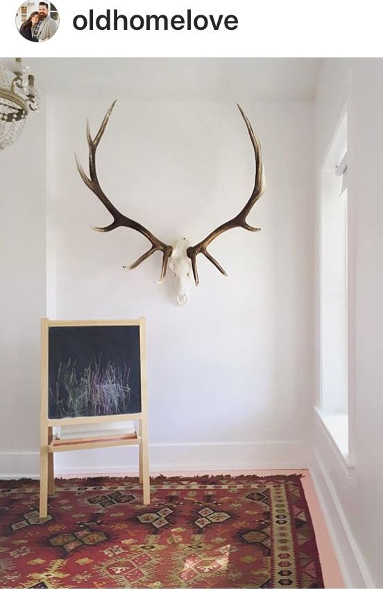 Love this taxidermy
