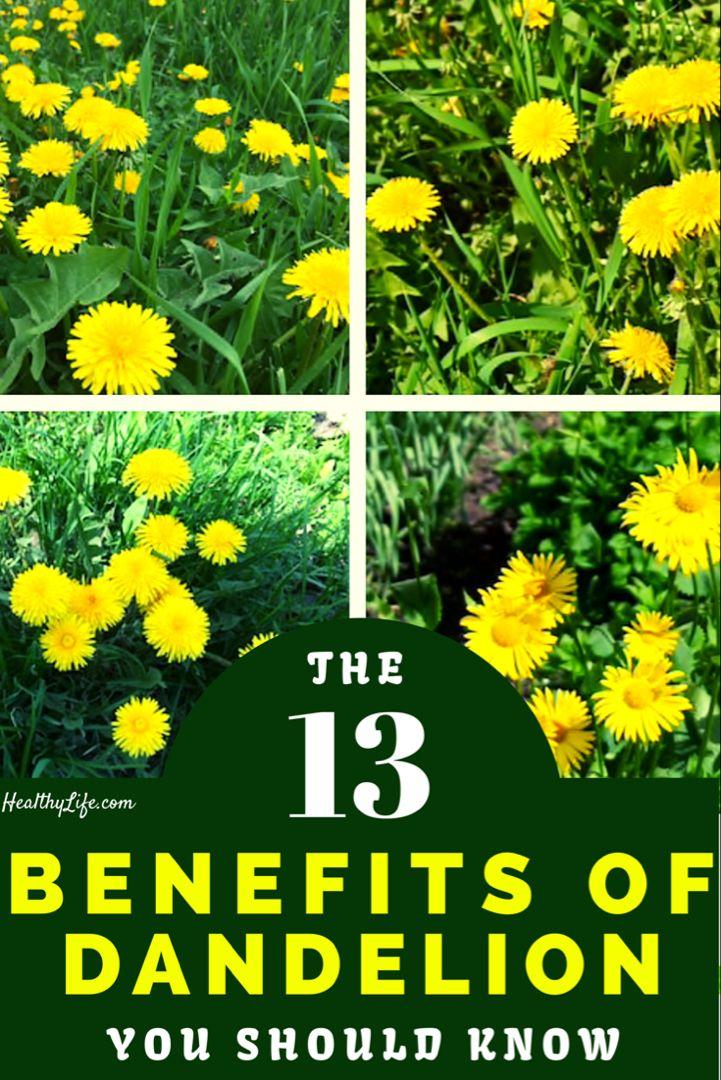The Health Benefits Of Dandelion Dandelion Benefits