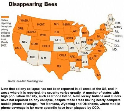 a study of colony collapse disorder or ccd World of bees colony collapse disorder, or ccd, is the most recent  basic  research to subsidizing the provision of native, non-honey-bee.