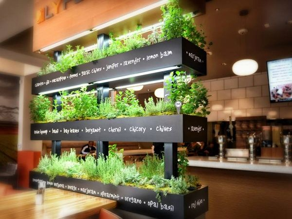13 Best Indoor Kitchen Herb Garden Images On Pinterest | Kitchen Herb  Gardens, Kitchen Herbs And Herbs Garden