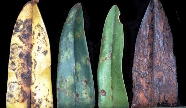Descubre todo sobre el enemigo invisible de nuestras plantas, ¡qué maligno!