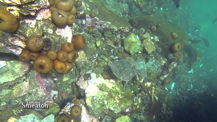 Exotic Sealife Below The Wharf