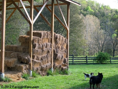 We're feeding the last of the hay while the grass grows up. One of 22 photos in this week's Friday Farm Fix, a new series on Farmgirl Fare where I share a random sampling of what's been happening during the week. :)