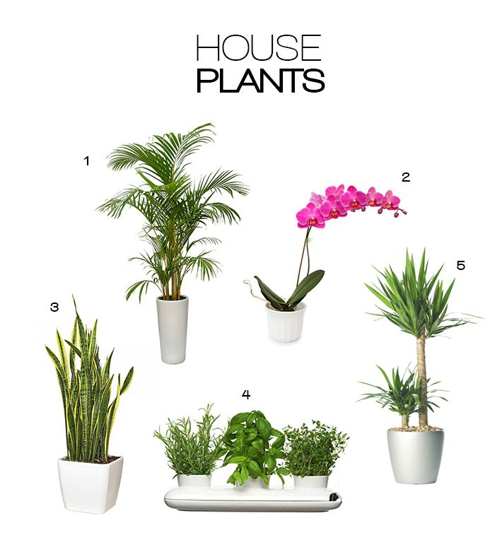 inside plants and flowers - 710×781