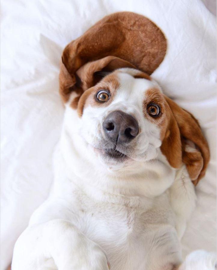 floppy ears and a goofy look