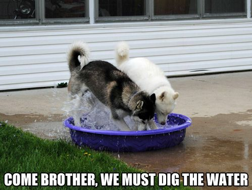 If I put ice cubes in my dogs water bowl, one of them does this. It's funny but a big mess.