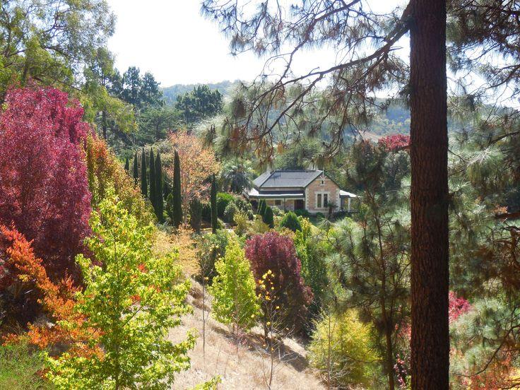 Amburwood. Taken from Burdetts Road, Basket Range, Adelaide Hills