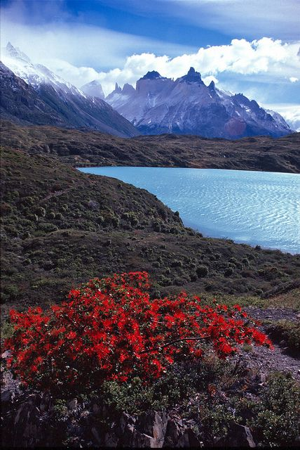 Tierra del Fuego, Lago Grey, Chile (by transalper).