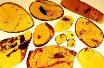 Ambra: Svolge un'azione antireumatica e assorbe il dolore. Efficace contro le malattie nervose e le vertigini. Utile per combattere bronchiti e sinusiti. Allontana malinconia e depressione svilluppando intensa energia positiva. Propizia l'amore rendendo affascinanti. Si porta ai polsi e sul 3° e 5° chakra. Colore giallo bruno e arancio con inclusioni.