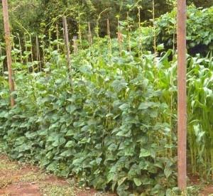Vertical gardening. Use upward space to grow your edibles l Carolina Gardens