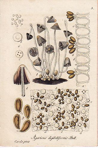plants illustration/植物画 (きのこ2)