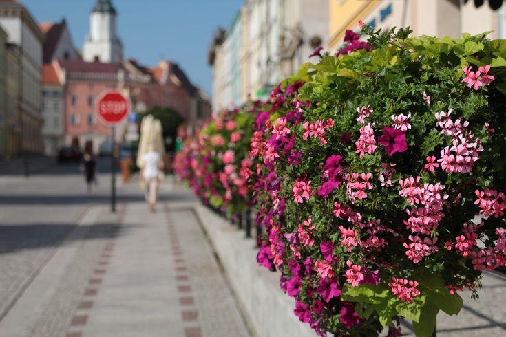 wieże kwiatowe terra ukwiecenie miasta kwietniki | flower boxes for cities