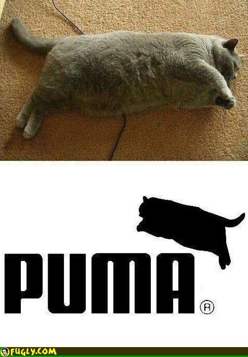 Fat Puma