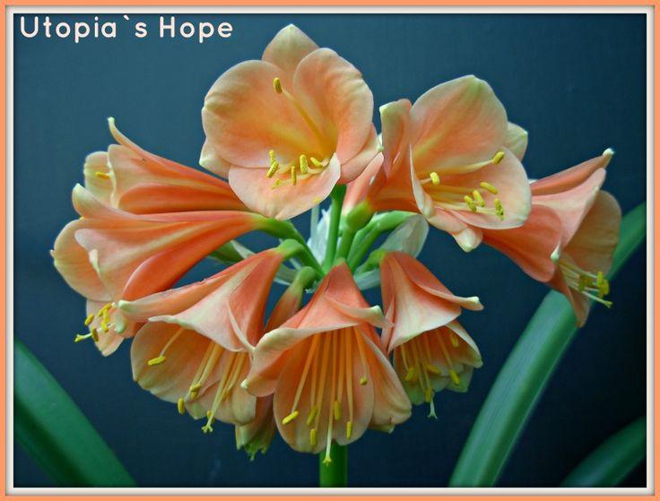 Utopia`s Hope