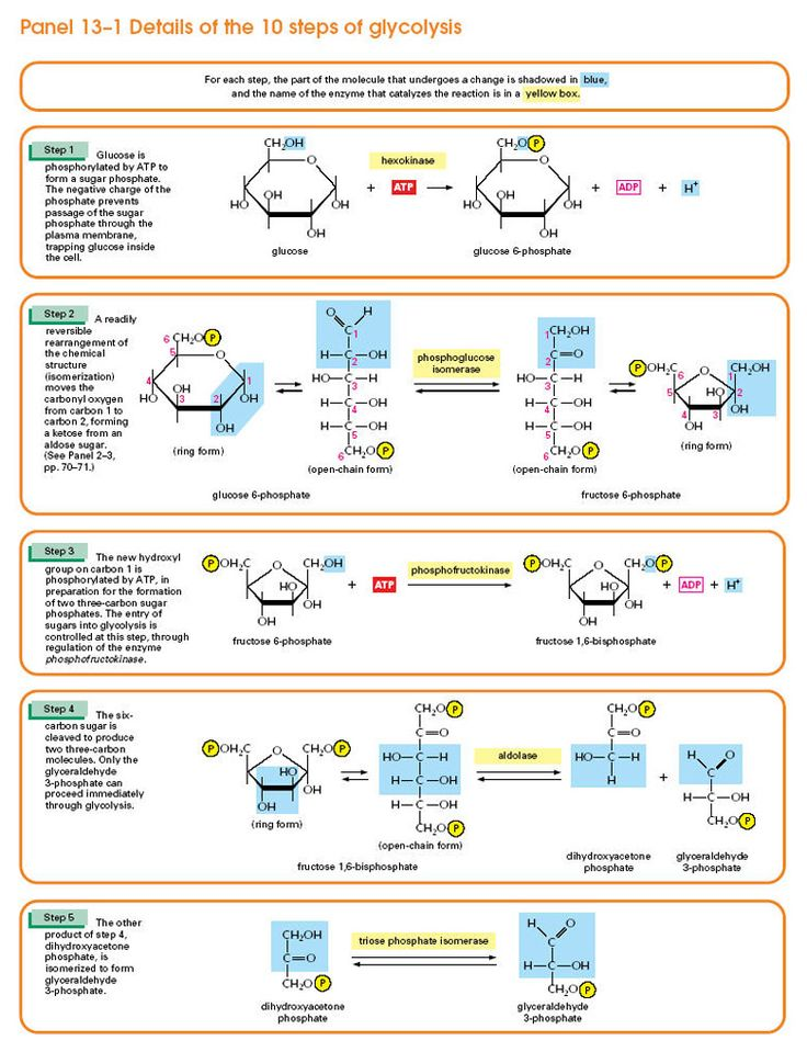 Details of the 10 Steps of Glycolysis: Part 2 of 2