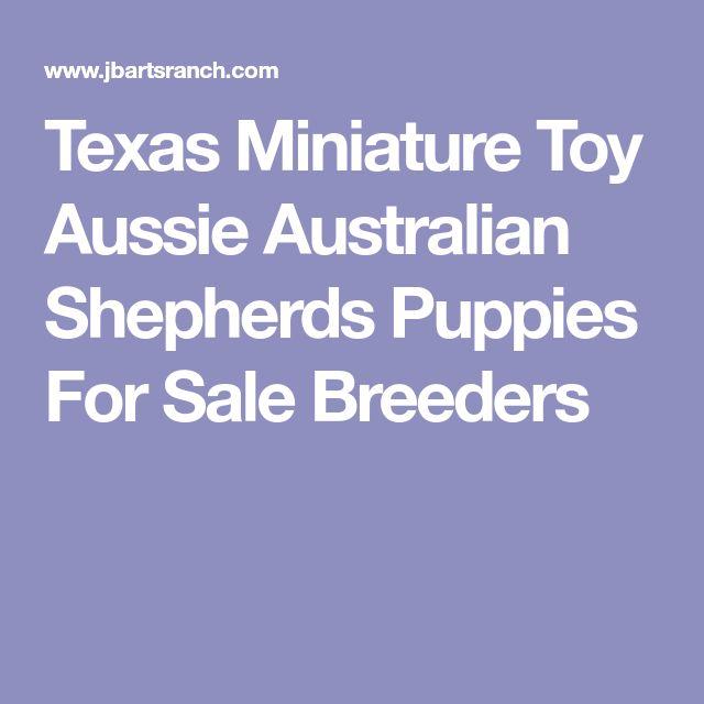 Texas Miniature Toy Aussie Australian Shepherds Puppies For Sale Breeders